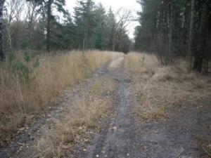 Dit pad is ondertussen verdwenen door de bosomvoming