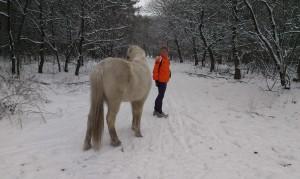 Hoezo? Wilde paarden