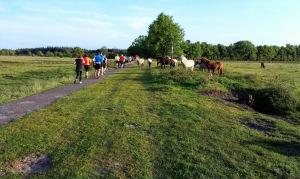 De paardjes kwamen eens kijken wat er te doen was!