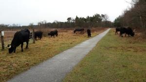 De eerste keer dat we deze kudde loslopend tegen kwamen. Even pas op de plaats.